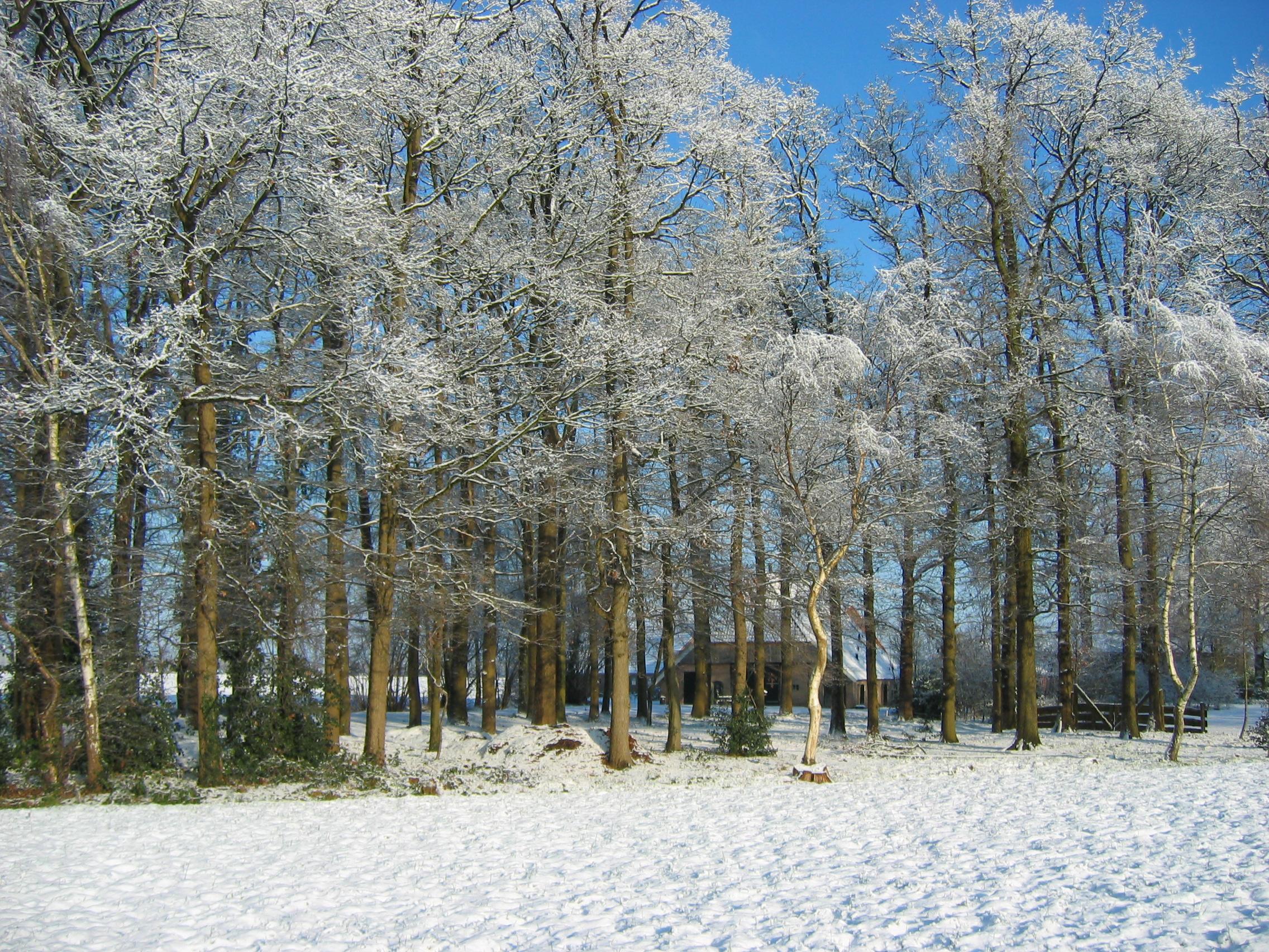 sneeuw2009-004